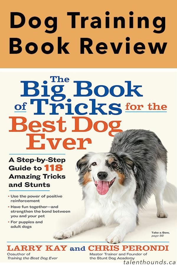 Larry Kay Big Book Of Tricks For The Best Dog Ever Review Dog