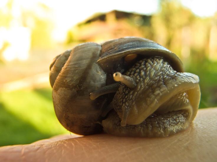 snail in the sun