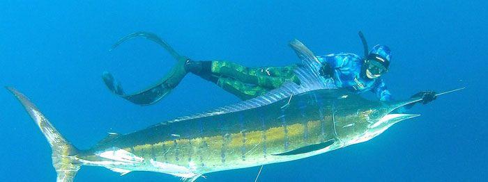 Pesca submarina en apnea - La guía mas completa para principiantes - Todo para la pesca