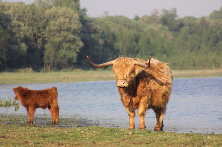 Dintelse Gorzen in Dinteloord, Noord-Brabant