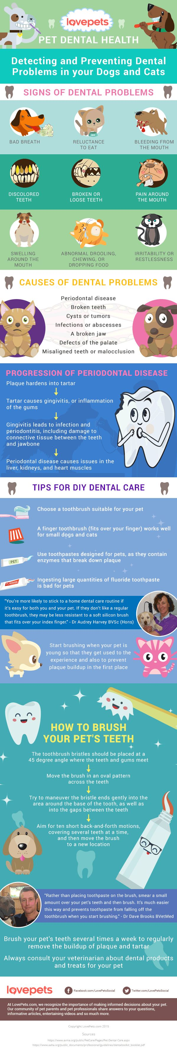 February Is Pet Dental Health Awareness Month Break Out Those Toothbrushes