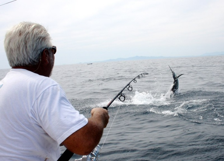 17 best images about game fishing on pinterest dolphins for Tuna fishing games