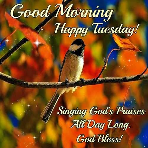 Good Morning Everyone Happy Tuesday : Best images about g mornin tuesday on pinterest