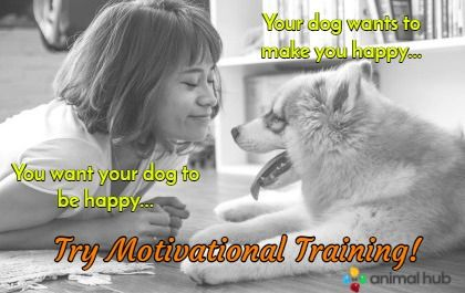 Check out our tips on using motivation to train your #dog!
