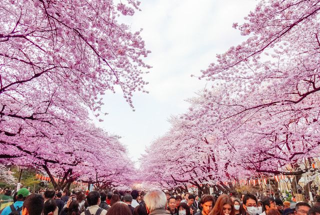 The Best Itinerary For Japan Oyster Com Cool Places To Visit Cherry Blossom Season Cherry Blossom
