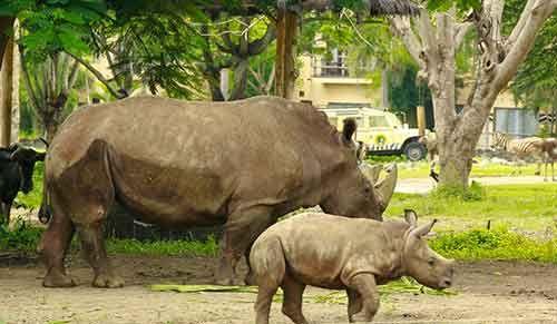 Bali Safari Marine Park Discount Tickets for RHINO PACKAGE