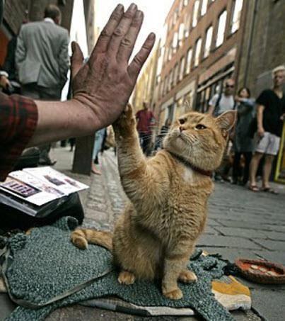 High Five | Funny or Cute Pet Memes | Pinterest | Cat ...