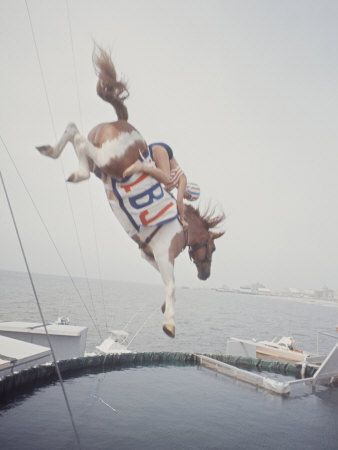 Horse with LBJ Banner Diving into the Water at Atlantic City