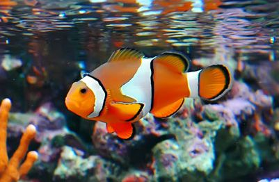 Because of little Ben, I will never forget, and always love Disney's Nemo . . .