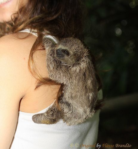 Baby sloth @Sheyna Petty Petty Webster
