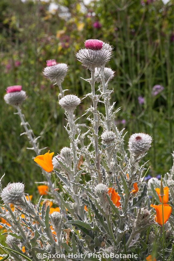 9 best images about southern ca garden inspiration on for Southern california native plants