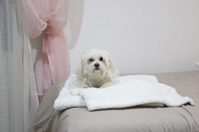 Con Perros y a lo loco | Vida perruna | Dogs & Lifestyle: Lista de enero: Carta a los RRMM
