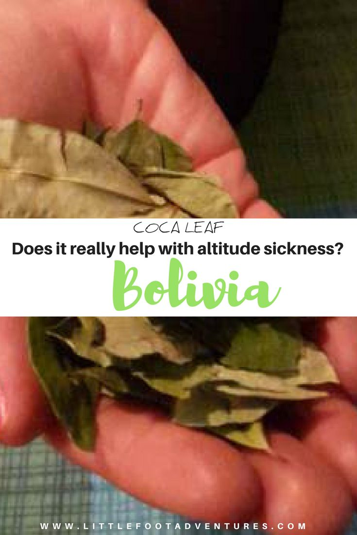 Have you ever tried Coca Leaf? It has been cultivated since at least the Inca Empire and used for a variety of medical and religious purposes in Bolivia.   Do they really work? Find out at www.littlefootadventures.com  Bolivia | South America | Coca Leaf | Altitude sickness | Altitude  #Bolivia #SouthAmerica #CocaLeaf #Altitude #Sickness