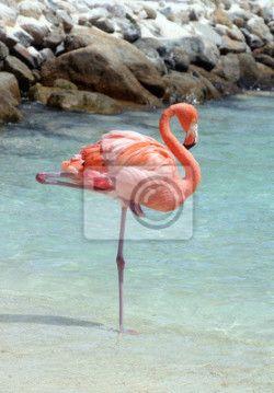 Fotobehang Roze flamingo, wilde vogel, Aruba - roze flamingo ✓ Makkelijke montage ✓ 100% ecologisch afgedrukt ✓ Bekijk de opinies van onze klanten!