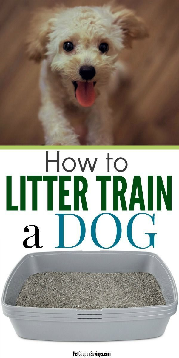 Dog Training 101 How To Train Your Dog Dog Litter Box