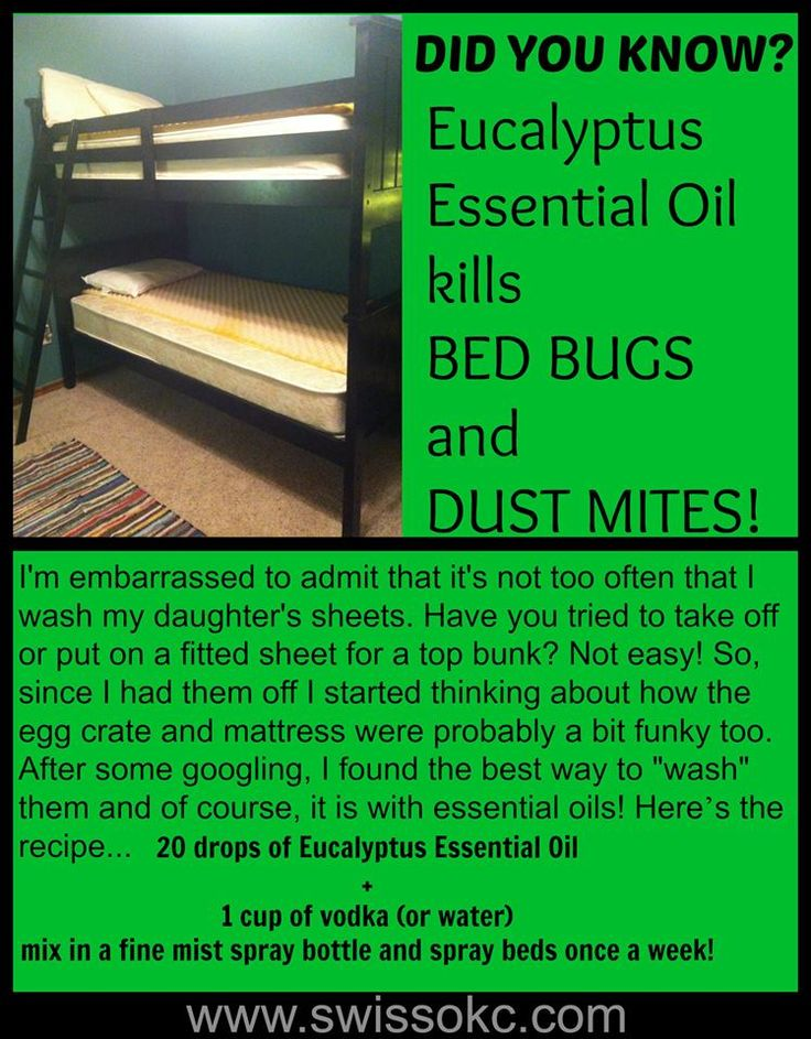 Use SwissJust Eucalyptus Essential Oil to kill bed bugs! www.swissokc.com