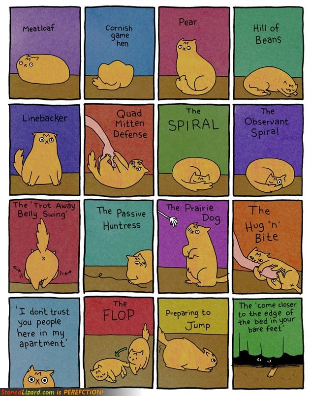 Tiger....Kitty Cat, Catlady, Cat Positive, Funny, Body Languages, Cat Body, Crazy Cat, Animal, Cat Lady