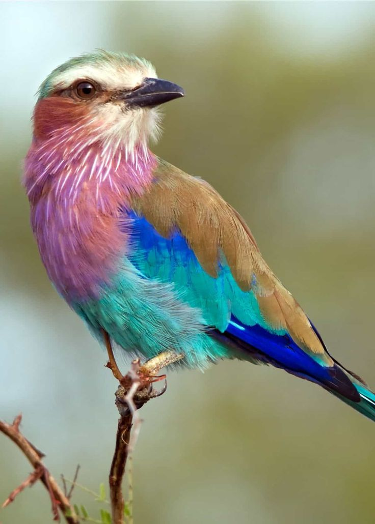 26 of the Most Colorful Birds on the Planet (And Where to Find Them)