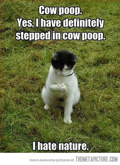 Cow stepped in cow poop? O.o