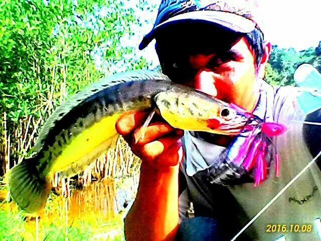 Danau Baru Rantau Kasih Kampar Kiri Riau
