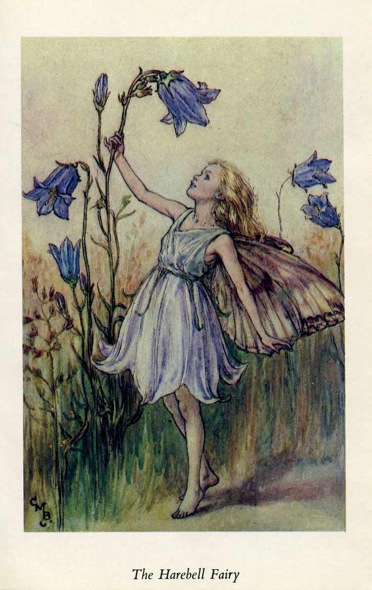 Flower Fairies The Harebell Fairy Cicely Barker 1960's