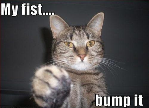 Sure thing cool cat: Funny Cat, Fistbump, Crazy Cat, Funny Stuff, Cat Crazy, Animal, Cat Photos, Cat Lady, Fist Bump