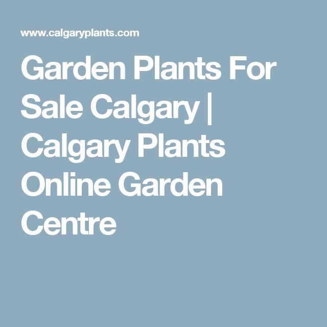 Garden Plants For Sale Calgary | Calgary Plants Online Garden Centre