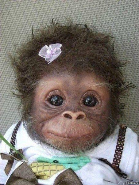 baby monkey...I want