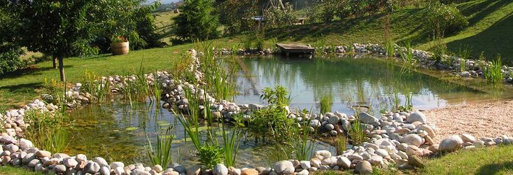 113 best images about ponds and pools on pinterest swim for Piscine ecologique
