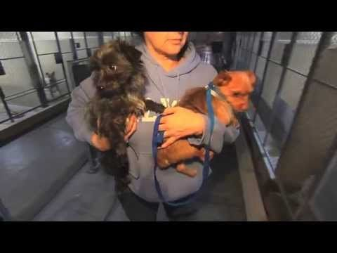 This Dog Is Supposed To Be Euthanized, But Watch Where He Takes Him Instead... - LittleThings.com