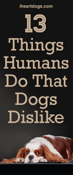 13 Things Humans Do That Dogs Dislike