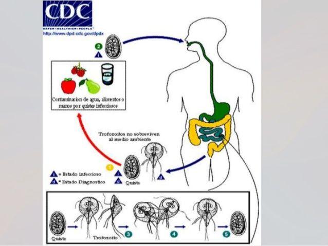 Manifestaciones clínicas Periodo de incubación: 1-2 semanas. La mayoría de los pacientes sintomáticos, presenta un periodo...
