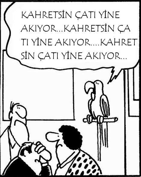 Bir emlakçı müşterilerine evi gösteriyor,yaramaz papağan işi bozuyor :) Herkese güvenmeyin :)