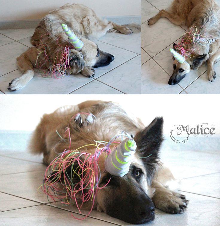 UNICORNO Costume di carnevale per cane.  I costumi devono essere indossati dai cani solo per brevissimi periodi e sempre sotto la supervisione attenta di un adulto.
