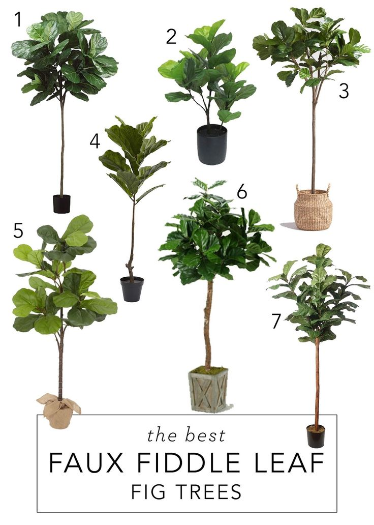 12th And White: The Best Faux Fiddle Leaf Fig Trees {And Where We Got