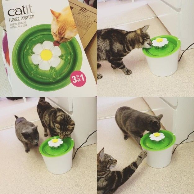 Keep your cats hydrated in style with the Catit Flower Fountain.