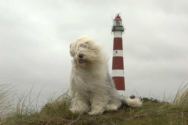 lighthouse dog :) - photo by dewollewei: Lighthouses Watchdog, Dogs Travel, Pet Photography, Lighthouses Dogs, Sea Dogs, Lighthouses Sea, Lighthouses Doggie, Dogs Photo, Dream Dogs
