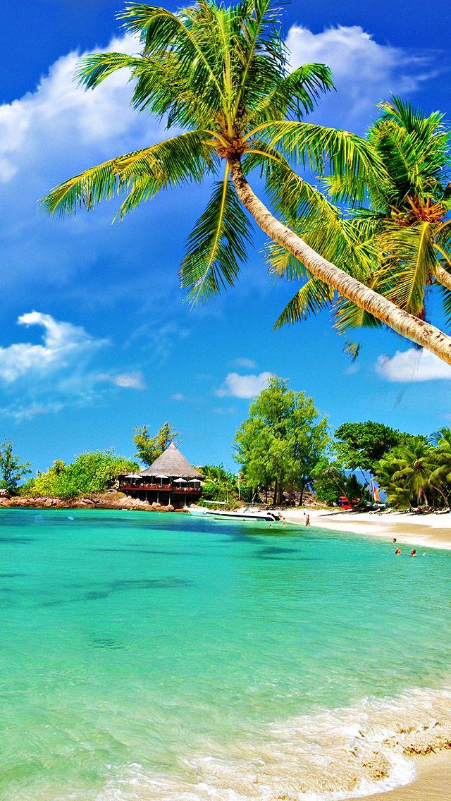 Tropical Palm Beach. iphone wallpaper beach paradise