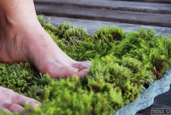 ber ideen zu moosgarten auf pinterest wachsendes moos g rtnern und moos terrarium. Black Bedroom Furniture Sets. Home Design Ideas