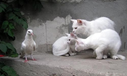 .Funny Kitty, Friends, Gallery, Funny Cat, Things, Feline, Birds, Animal, White Cat