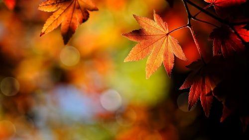Őszi falevelek, ősz,falevél