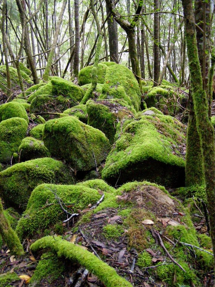 mossy boulders by the river, Cathedral Rock track, Mt Wellington TAS by Tassie JB