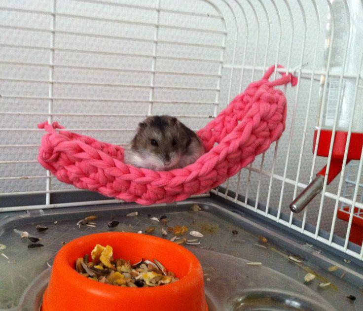 German Hamster Cage Setup Themes Ecosia