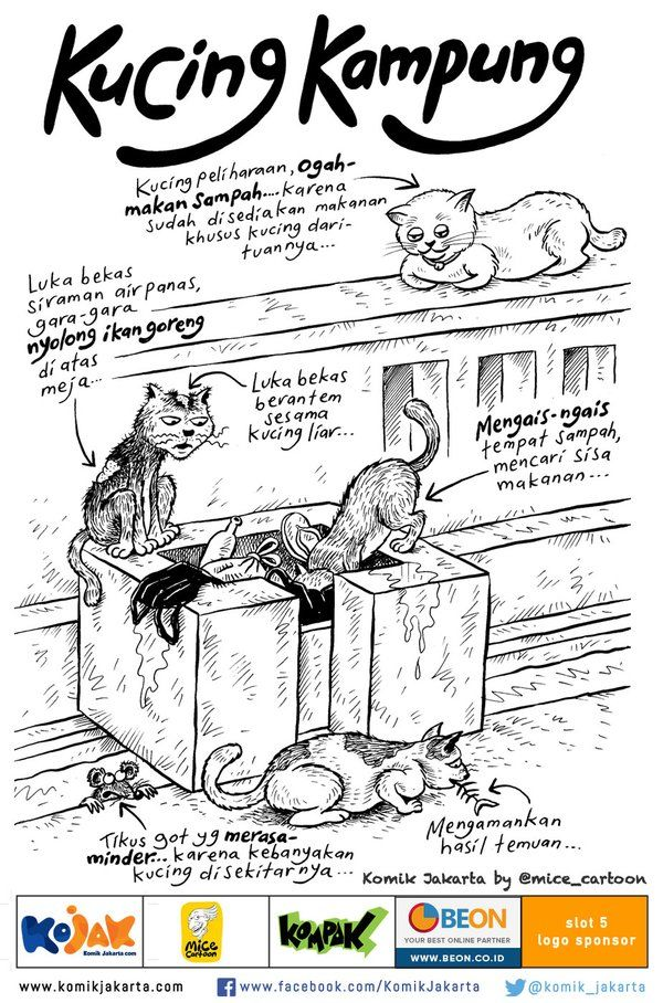 Kucing Kampung by @mice_cartoon #KomikJakarta https://t.co/KxptpSGO02