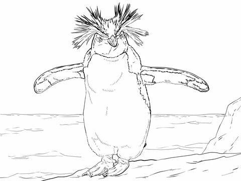 Pingüino Saltarrocas Dibujo para colorear | animales | Pinterest ...