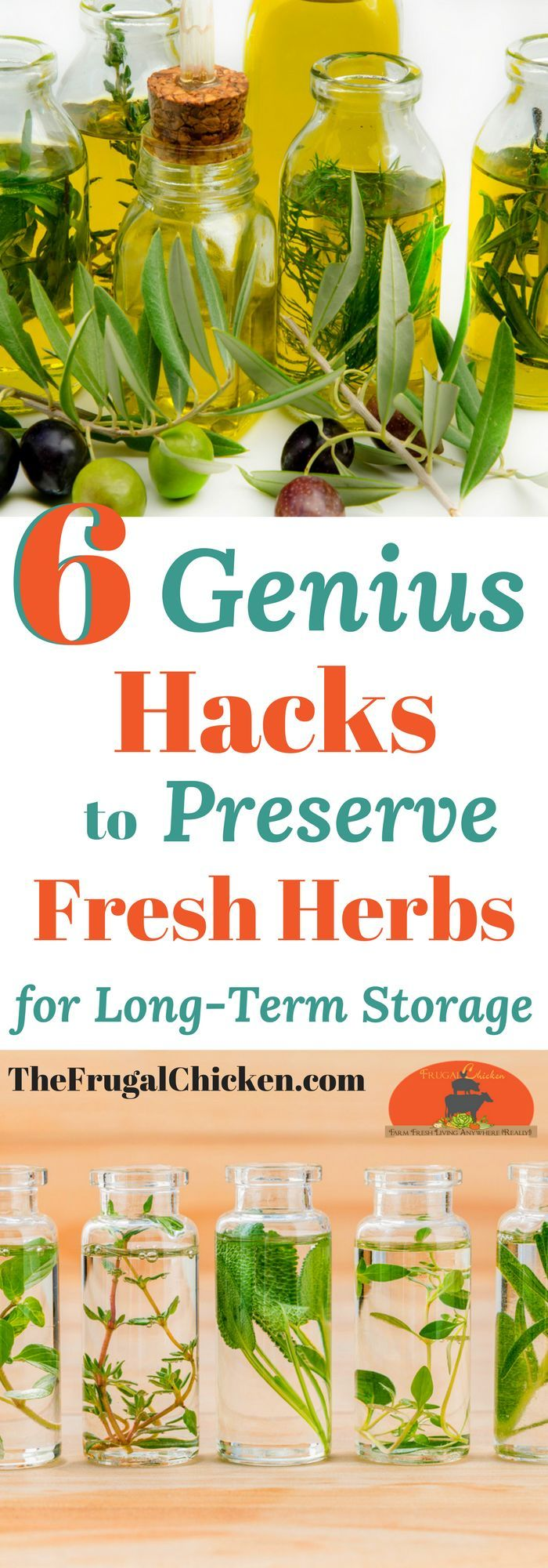 Harvesting tons of fresh herbs? Buy too much at the store or farmer's market? Here's 6 genius ways to preserve fresh herbs for long term storage!