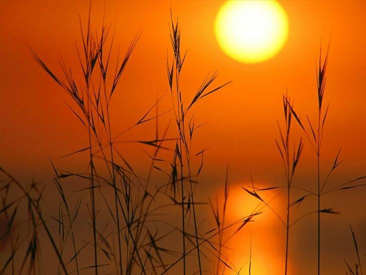 SunsetOrange, Nature, Weed, Sunris, Denzel Washington, Beautiful Sunsets, Glow, Sunsets Photography, Hot Summer