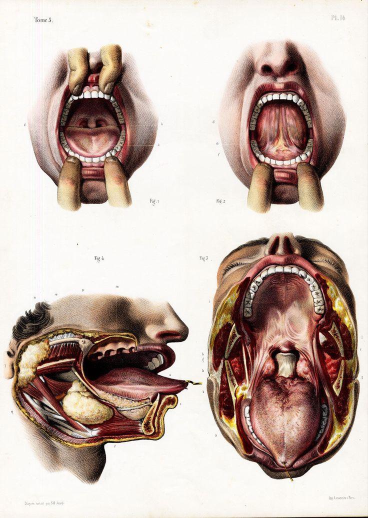The 279 best Anatomy images on Pinterest | Human anatomy, Anatomy ...