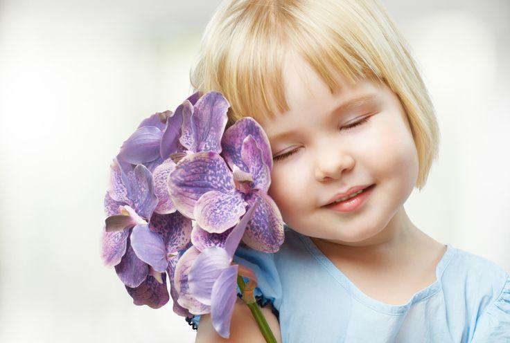 1920x1295 purple orchids wallpaper screensaver