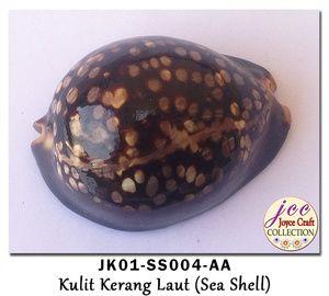Kulit Kerang Untuk Craft,  Kerajinan Tangan & Hobby - JK01-SS004-AA
